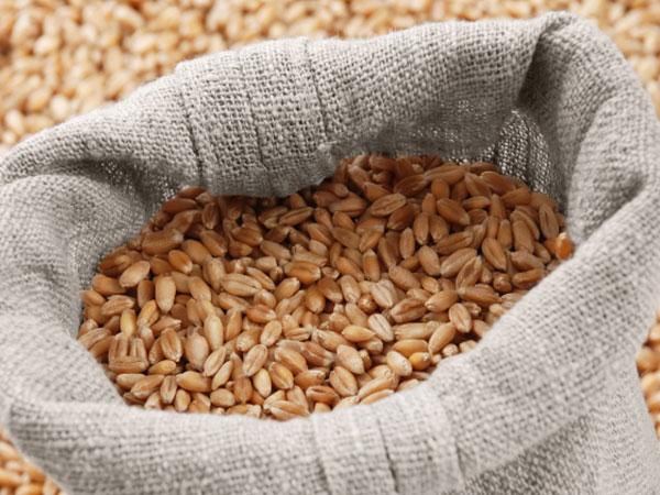Uspešan otkup pšenice i uskoro bolji kvalitet brašna u ŽITO BAČKOJ