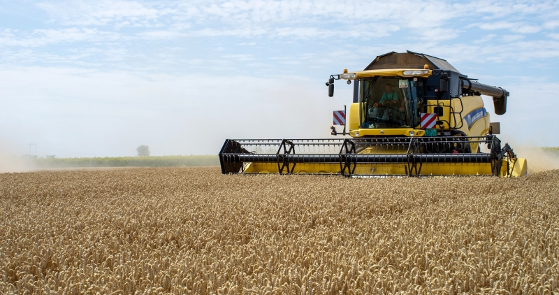 MK Group is the largest exporter of domestic grains