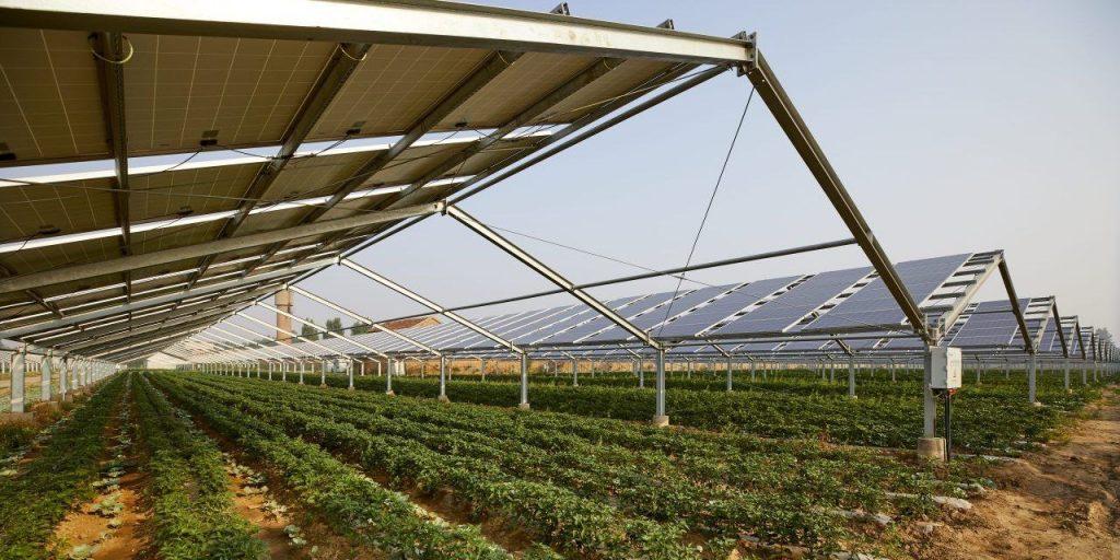 Fintel Energija i MK Group donose inovacije za održivu proizvodnju hrane i energije